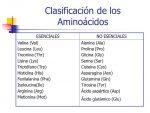 Clasificación de los Aminoácidos Escenciales y no Escenciales