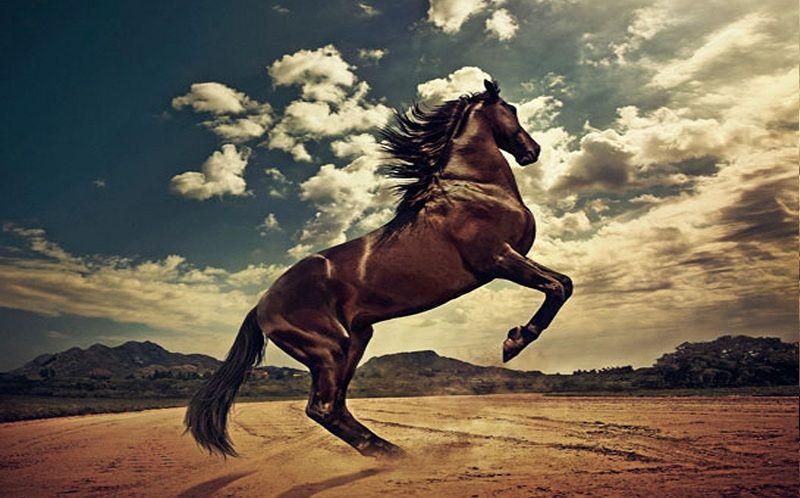 mejores caballos