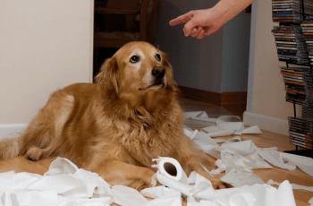 como-enseñar-a-mi-perro-a-no-morder
