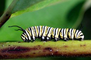 la clasificación de los animales invertebrados